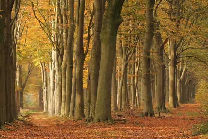 Herfst op landgoed Mattemburgh.
