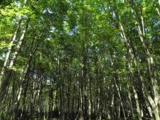 Mini-bos in woonwijk Vlaardingen: scholieren doen het onderhoud