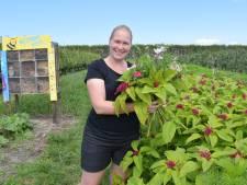 Bij Jakko en Patricia in Aardenburg pluk je zelf frambozen en bloemen: 'Je wordt er kalm van'