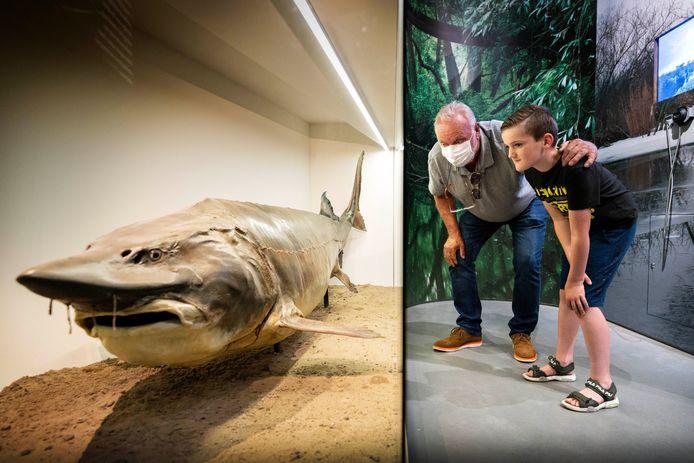 Het Biesboschmuseum was weer open na een lange coronastop. Hier wordt een grote steur bewonderd.