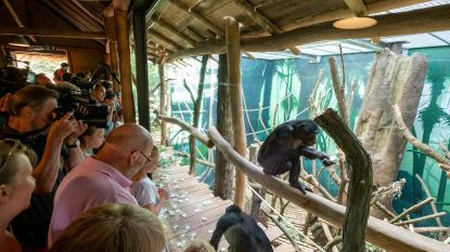 """Planckendael opent Expeditie Bonobo. """"Voorbeeld voor de wereld"""""""