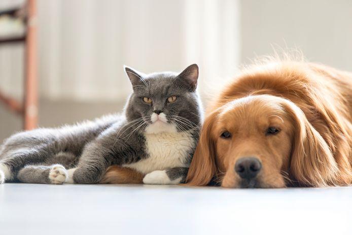 Aan het onderzoek voor het dierenvaccin deden onder meer nertsen, honden, katten en poolvossen mee.