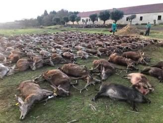 Spaanse jagers doden 500 herten en wilde zwijnen tijdens jachtpartij in Portugal