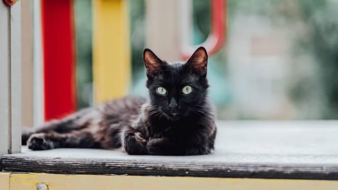 """""""Mijn kat is een dief"""": Amerikaans huisdier steelt bezittingen van buren"""