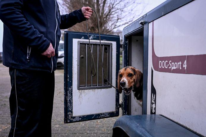 Onder meer deze hond volgt een training tot 'coronaspeurhond',  in Jabbeke