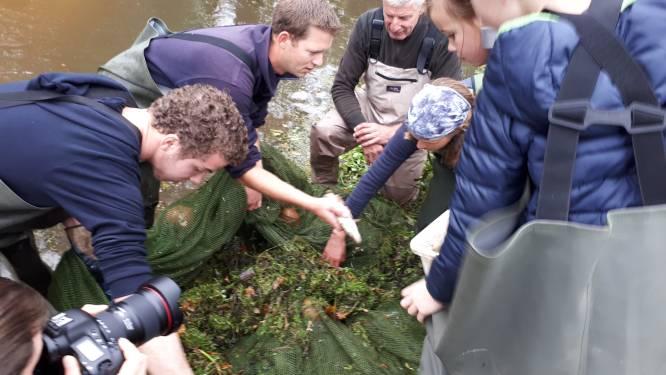 De stromende Aa ideale herberg voor allerlei riviervissen