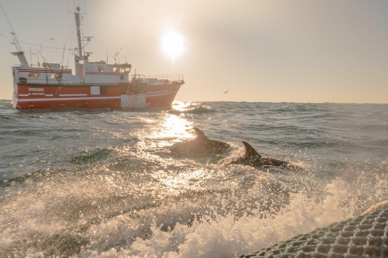 Dolfijnen zwemmen tussen een zodiac van Sea Shepherd en een vissersboot door. Zullen de dieren uit de greep van de netten kunnen blijven? Beeld Jules Emile