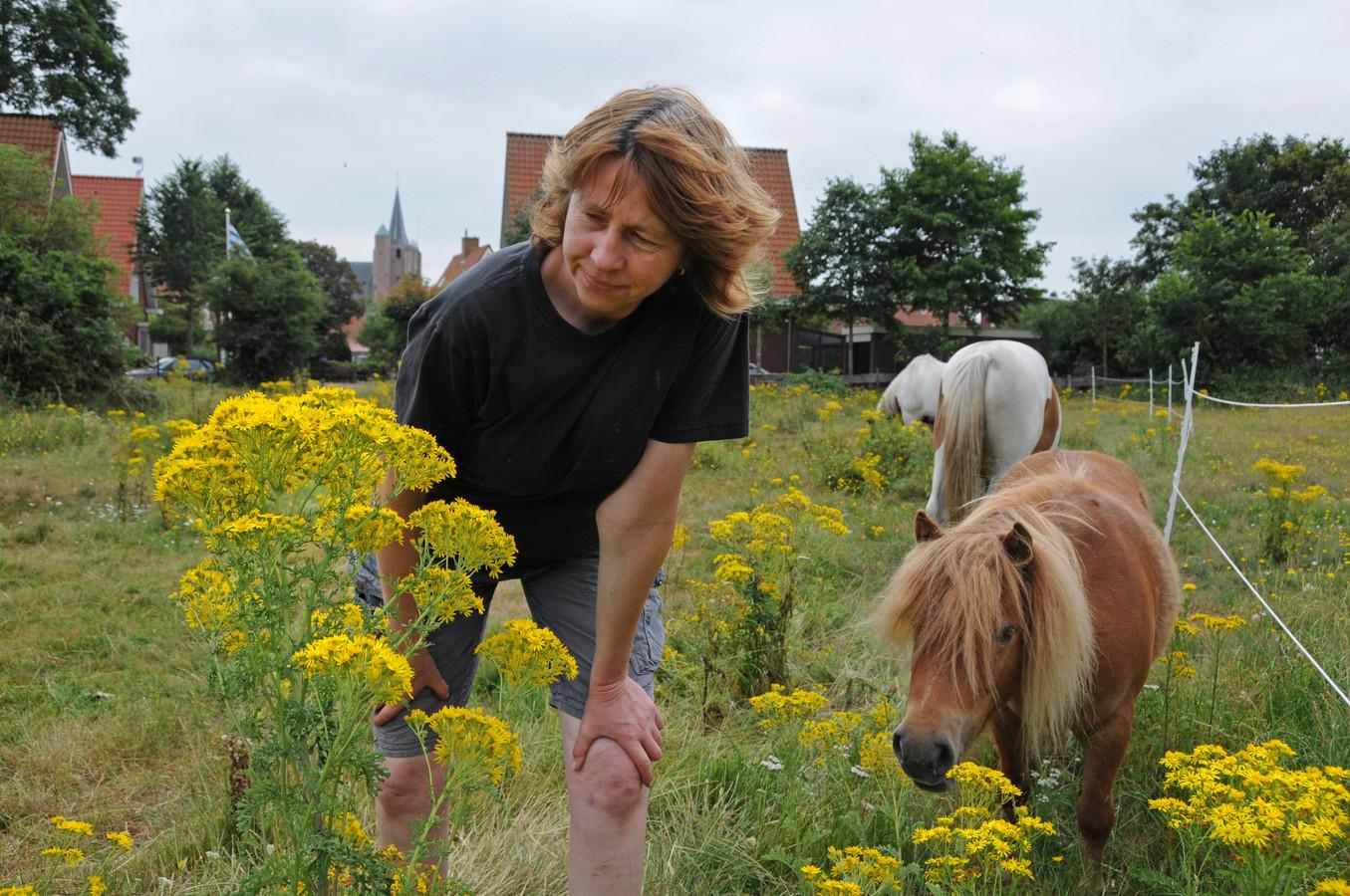 Bertie Steur tussen haar paarden en een wei vol jacobskruiskruid. Vier van haar paarden overleden aan het kruid.