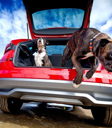 Met Bella op reis? Zo vervoer je honden (en andere dieren) goed in de auto