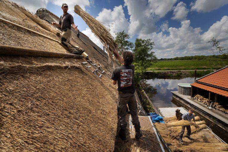 Rietdekkers in Weteringen bedekken een dak met riet afkomstig uit het nabijgelegen natuurgebied de Wieden. Beeld Herman Engbers