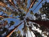 Houtprijs drastisch laag door keverplaag: '20 miljoen euro is nodig, anders verdwijnt groot stuk bos'