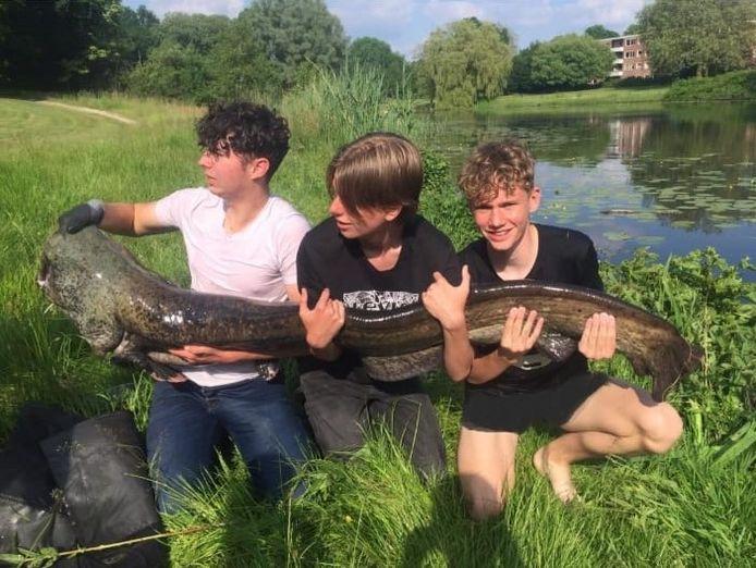 Tristan Leeftink (links) met zijn vrienden Roman (midden) en Levi (rechts) ze houden de monsterlijke meerval van 185 centimeter en 40 kilo vast.