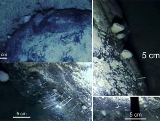 Wetenschappers ontdekken tot hun verbazing leven onder ijslaag van 900 meter in Antarctica