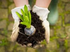 Ministerie zoekt 'klimaatburgemeester' in Etten-Leur