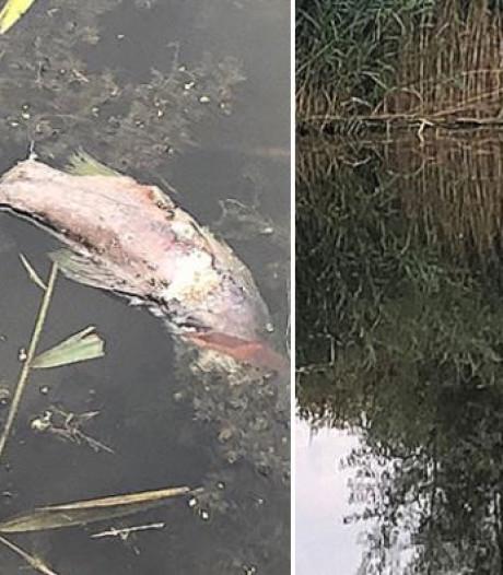 'Vissen in sloot in Delfgauw dood door maai-actie'