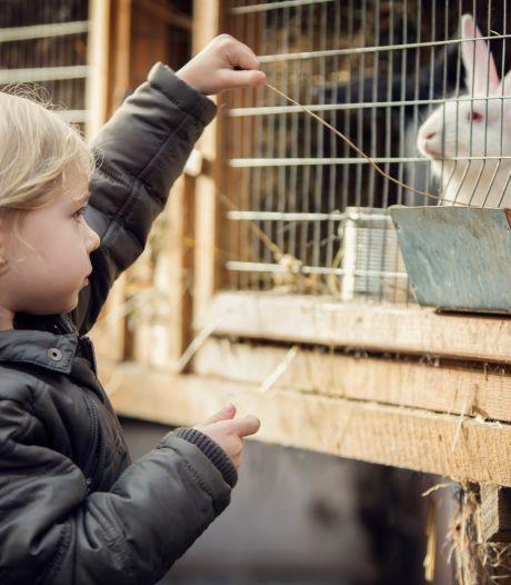 Uitbraak dodelijke konijnenziekte onder tamme konijnen in de Bommelerwaard