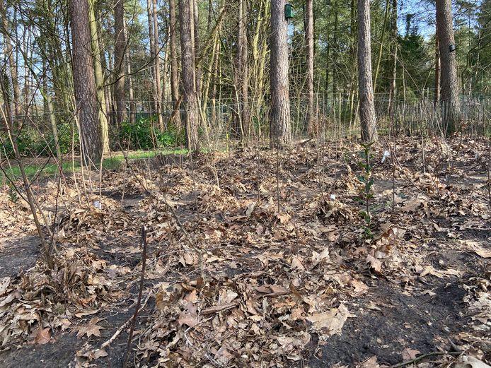 In de zopas aangelegde Tiny Forest in Wildert staan 42 verschillende soorten planten. Na 10 jaar zou het minibos volgroeid zijn