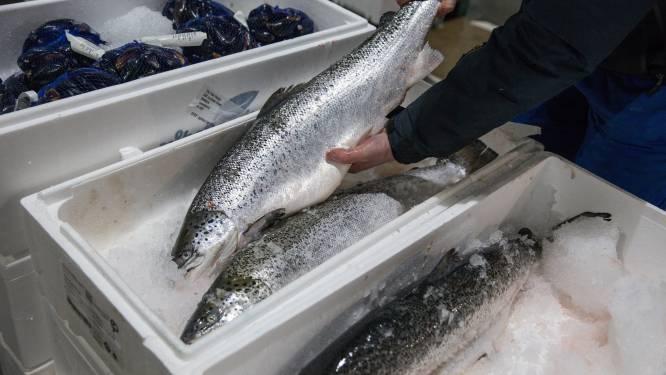 Schotse vis niet vers genoeg in Europa door brexitgerelateerde grensvertragingen: prijs ingestort