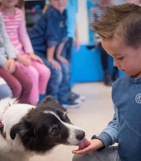 Hond in de klas is 'best een beetje spannend'