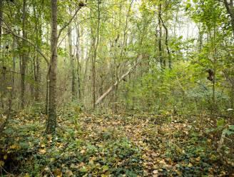 Natuurpunt ontsluit Zennebeemdenbos met luisterwandeling