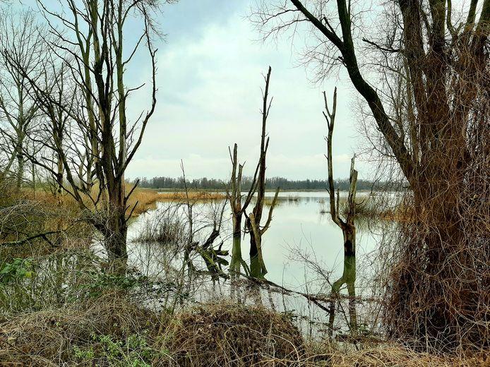 De Biesbosch bij het Gat van der Noorderklip