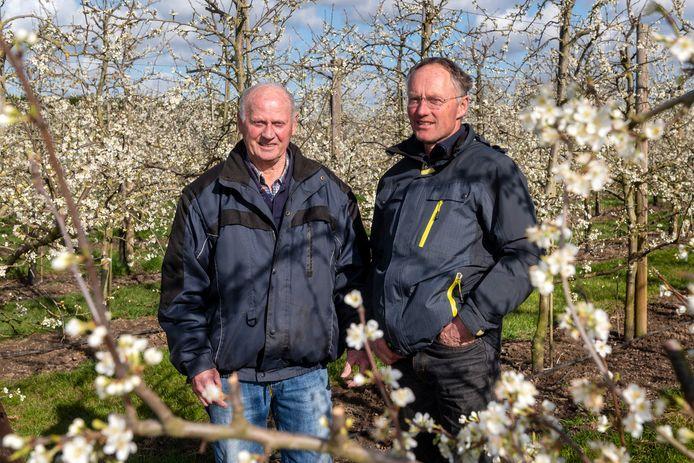 Jasper Bouwman met zijn vader Henk in de bloeiende boomgaard.