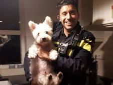 Hoe hond Frodo drie inbrekers inrekende in Harderwijk