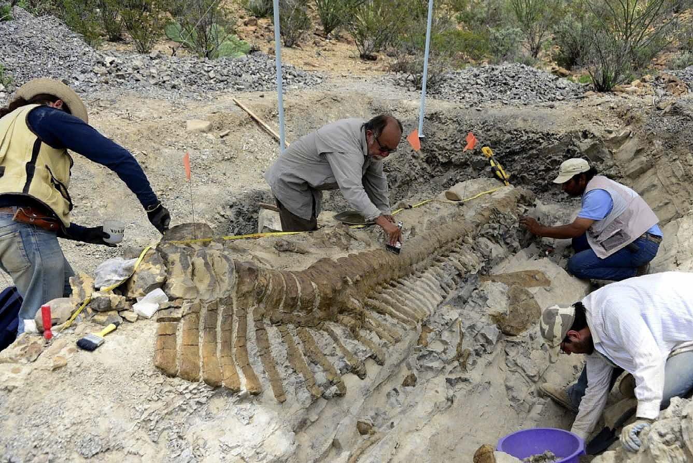 Mexicaanse paleontologen leggen de staart bloot van de dinosaurus in de staat Coahuila.