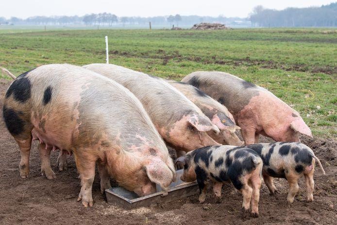 Het Achterhoekse bedrijf Voerwaarts heeft varkensvoer gemaakt dat volledig bestaat uit afvalproducten uit de voedingsindustrie.