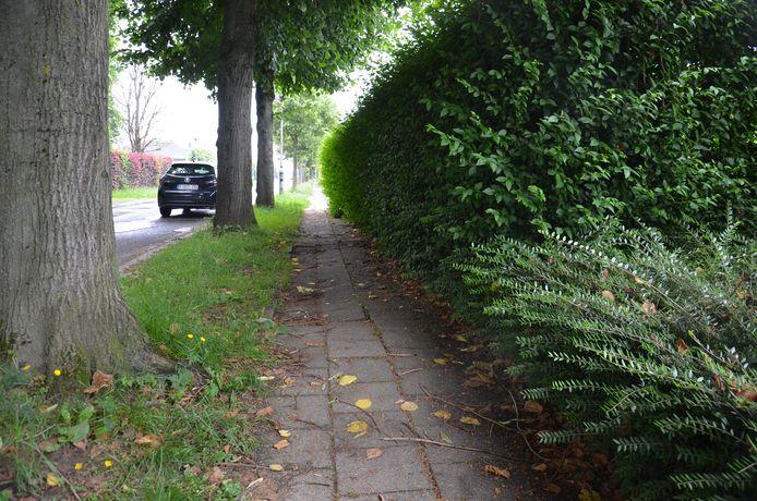 Archiefbeeld - De voetpaden in de Lindendreef in wijk Hof Ter Duyst.