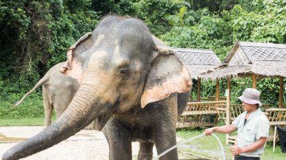 Knuffelsafari bij de olifanten