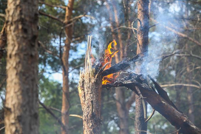 Bosbrand in Deurne