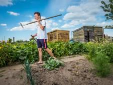 Tygo (17) uit Heerde weet waarom de volkstuin hip is: 'Het is gewoon heel chill om je eigen groenten te kweken'
