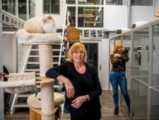 Kattenhotel ziet inkomsten verdampen: 'We zijn afhankelijk van mensen die op vakantie gaan'