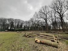 Massale kaalslag in voormalig Land van Ooit? Soms moet je slopen voor meer biodiversiteit