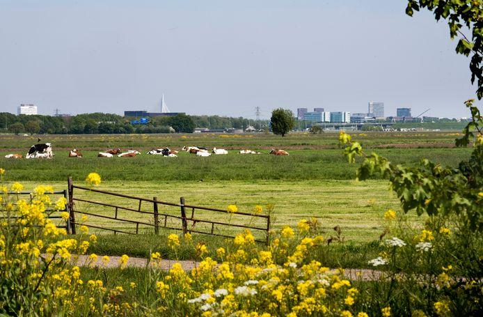 De polder Rijnenburg is nu nog een open weidelandschap. Komen hier uiteindelijk toch woningen?
