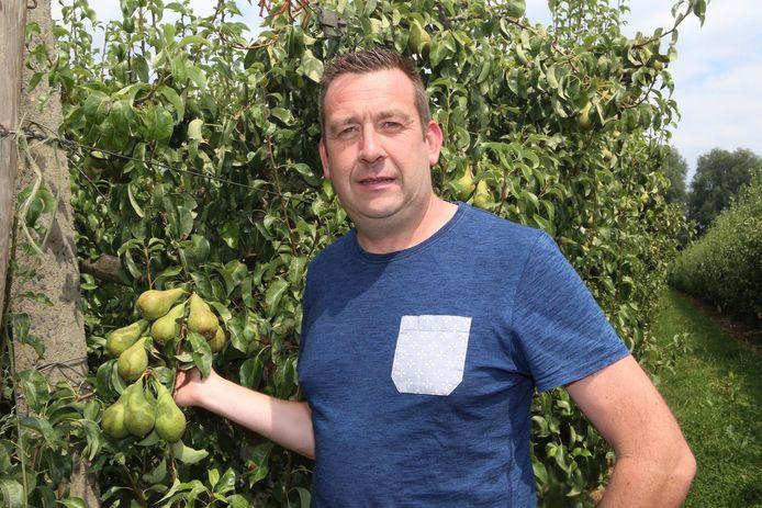 Voorzitter van sectorvakgroep fruit Luc Borgugnons bij de perenbomen.