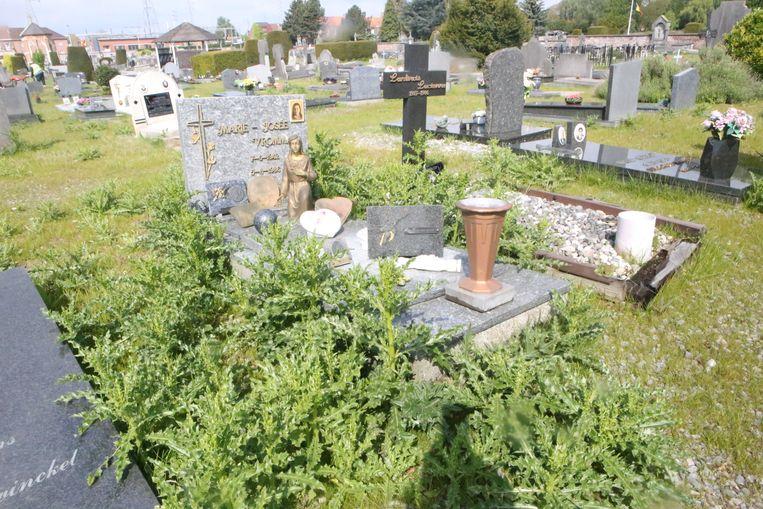 De distels groeien weelderig tussen de graven.