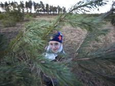 Gratis kerstboom om stuifzand te helpen
