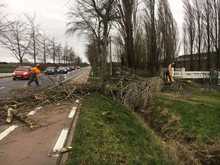 In de Tieltstraat in Dentergem kwam een boom op de weg terecht.