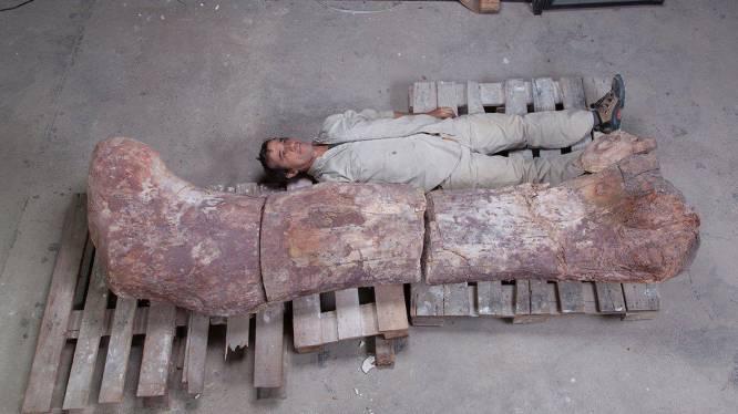 Grootste dinosaurussoort ter wereld wordt 'Patagotitan mayorum' gedoopt