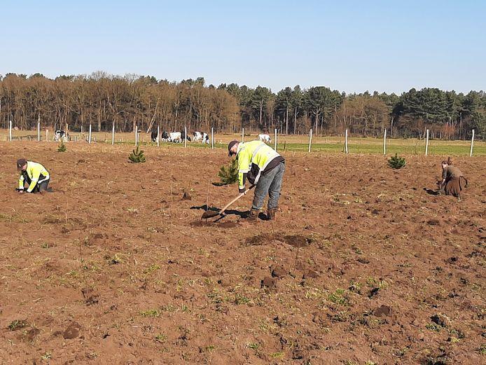 Nabij de Heibloemstraat in De Moer plant Natuurmonumenten 1200 boompjes van inheemse soorten.