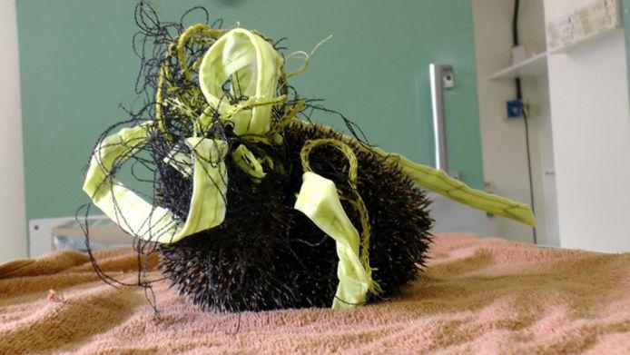 Gevangen in het net, kon de egel niet meer eten of bewegen.