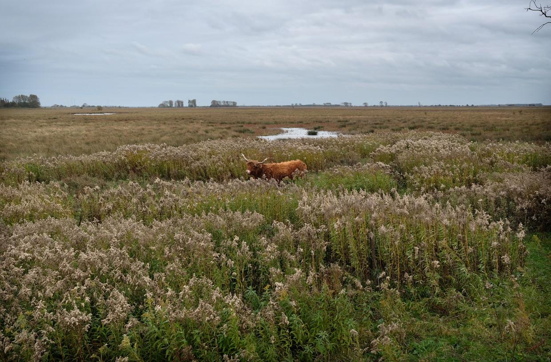 Het eiland Tiengemeten in Zuid-Holland. Beeld Marcel van den Bergh / de Volkskrant