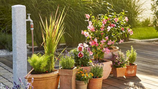 Je tuin verzorgen met een minimum aan water, zo doe je dat