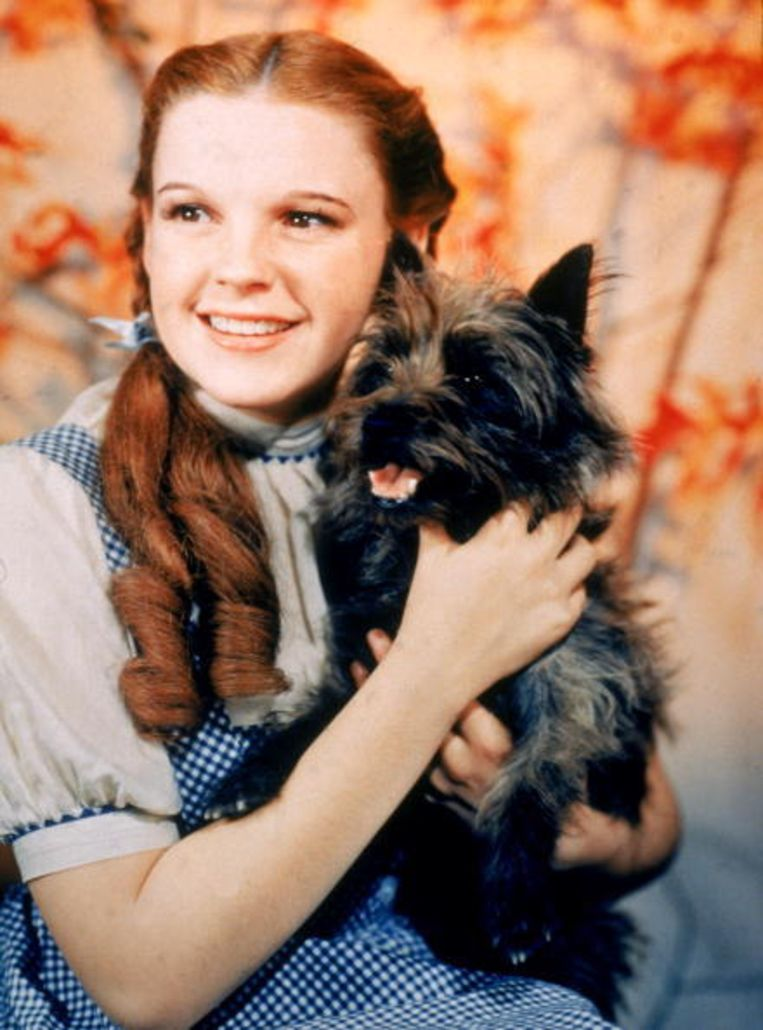 Judy Garland als Dorothy in The Wizard of Oz. Beeld UNKNOWN