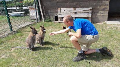 """""""Kleine opening genoeg voor wallaby"""""""