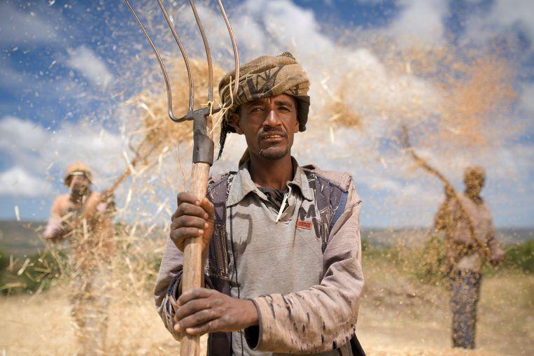 Boeren in Ethiopië oogsten tarwe.  Beeld Jim Richardson / National Geographic Creative / Corbis