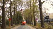 Hinder tijdens snoeien van bomen in Veerledorp
