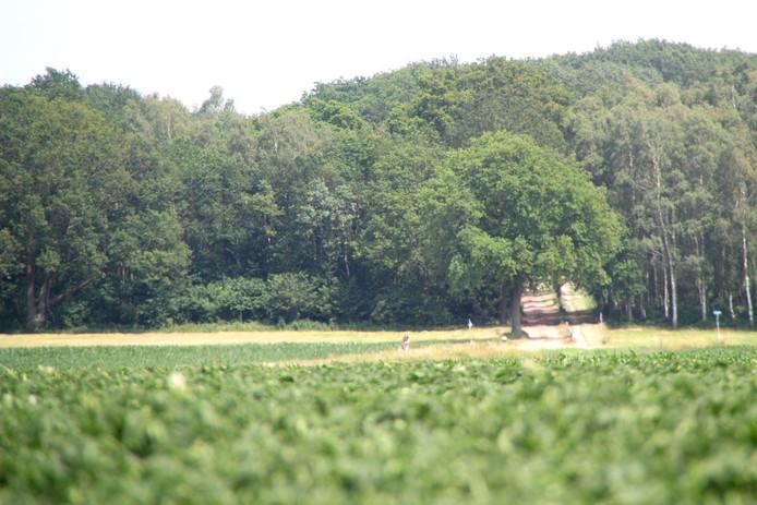 De Needse Berg met de Brummelweg (zandweg). Links daarvan moet de mast komen.